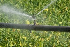 Irrigation. Agricultural Sprinkler on the plant Royalty Free Stock Photo