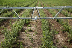 Irrigation in agriculture Royalty Free Stock Photo