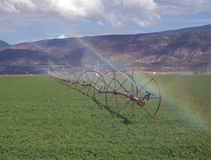 Irrigation and Alfalfa. A rural alfalfa field with a wheeled irrigation line Royalty Free Stock Images