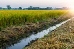 The Irrigation canal for agriculture near rice fields. Rual scene Thailand. Sunrise time Royalty Free Stock Photos