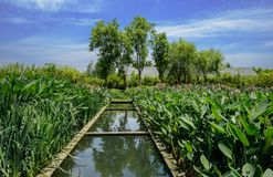 Irrigation canal in grassy fields before building at sunny summer noon. Irrigation canal in grassy fields before the building at sunny summer noon,Chengdu,China stock photos