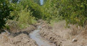 Irrigation canal in orange garden. Irrigation canal supplied for agriculture in rural areas, orange gardens in Turkey, Antalya stock footage