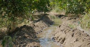 Irrigation canal in orange garden. Irrigation canal supplied for agriculture in rural areas, orange gardens in Turkey, Antalya stock video