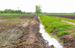 Irrigation canal in a rural tropical rice field. Royalty Free Stock Photos