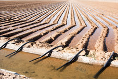Irrigation canal & siphon tubes. An irrigation canal and siphon tubes used to water a field in Arizona Royalty Free Stock Photos
