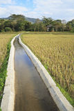 Irrigation canal system in rice fields Stock Photography
