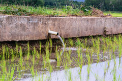Irrigation  canal, waterway,Water trough in rice field Stock Photography