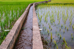 Irrigation  canal, waterway,Water trough in rice field Stock Image