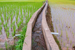 Irrigation  canal, waterway,Water trough in rice field Royalty Free Stock Photography