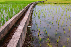 Irrigation  canal,waterway, Water trough in rice field Royalty Free Stock Image