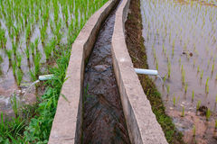 Irrigation  canal, waterway, Water trough in rice field Stock Images