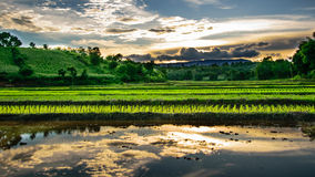 Irrigation  canal, waterway, Water trough in rice field Royalty Free Stock Photography