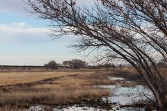 Irrigation canals in New Mexico winter landscape, Bosque del Apache. Horizontal aspect royalty free stock photography
