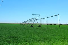 Irrigation in the cereal area with center pivot system. In the boundless cereal field, the plants are irrigated with the center pivot irrigation system. This stock photos