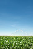Irrigation of corn Royalty Free Stock Images