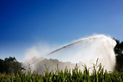 Irrigation of the corn Stock Image
