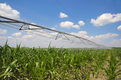 Irrigation of Corn Field Stock Photos