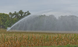 Irrigation of Corn Field Stock Images