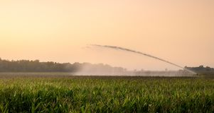 Irrigation on Corn Field Royalty Free Stock Images