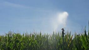 Irrigation stock video