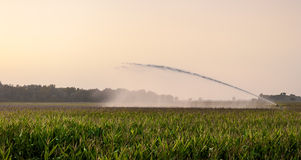 Irrigation on corn field Stock Images