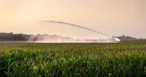 Irrigation on corn field Stock Photo