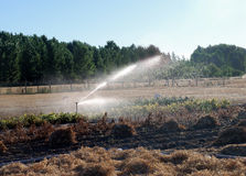 Irrigation in cultivated field 5 Royalty Free Stock Photos