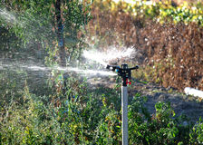 Irrigation in cultivated field 3 Royalty Free Stock Photo