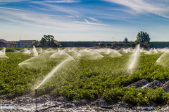 Irrigation of cultivated fields in the countryside in the north. Modern agriculture tecniques - water irrigation of cultivated fields in the countryside in the royalty free stock image