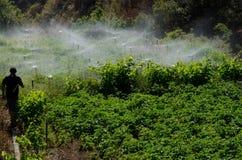 Irrigation d'une culture de pommes de terre image stock