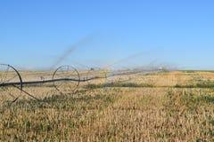 Irrigation de chute Images stock