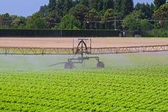 Irrigation de gisement de salade images stock