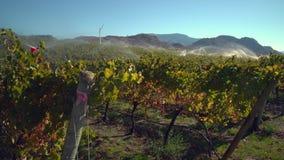 Irrigation de vignoble AVANT JÉSUS CHRIST, le Canada, 4K UHD banque de vidéos