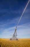 Irrigation de zone de blé Photographie stock