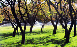 Irrigation des arbres fruitiers Photographie stock