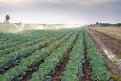 Irrigation des légumes Photo libre de droits