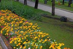 Irrigation des lits de fleur photographie stock libre de droits