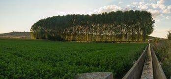 Irrigation ditch Alfalfa Field Sunset Stock Photos