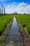 Irrigation drain at a paddy field on a sunny day. Landscape shot of an Irrigation drain at a paddy field on a sunny day with blue sky and white clouds stock images