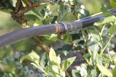 Irrigation Drip and Hose Royalty Free Stock Photography