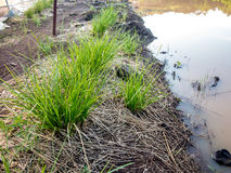Irrigation dripper Stock Photo