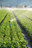 Irrigation on farm field Stock Images