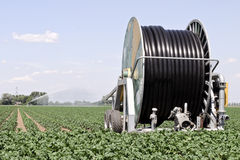 Irrigation farmland Stock Photo