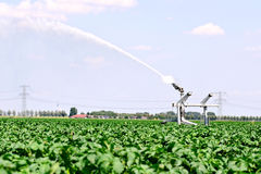 Irrigation farmland Stock Images