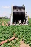 Irrigation farmland. Irrigation of vegetables on dry farmland royalty free stock photos