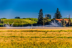 irrigation of farmland in summer Stock Image