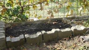 Irrigation of fertilized area of the farm / garden Royalty Free Stock Photo