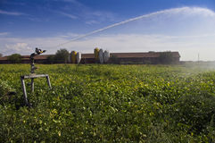 Irrigation of a field Royalty Free Stock Image