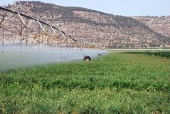 Irrigation field Stock Image