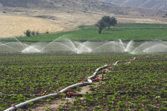 Irrigation Of Field Royalty Free Stock Photos